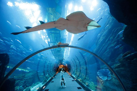 Aquarium and underwater Zoo in the Dubai Mall, Dubai, United Arab Emirates