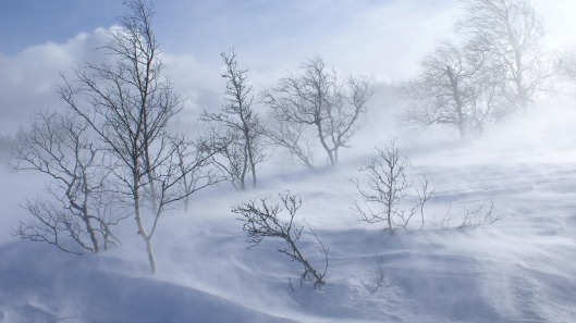 windy-winter-day-ewallpapers2560-1440-4760