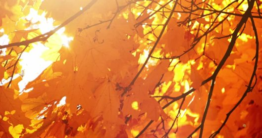 autumn-leaves-gold